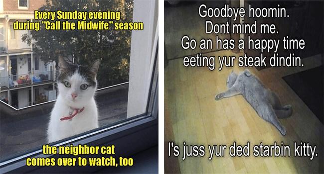 lolcats funny memes cute Memes cute cats Cats funny cat memes - 5444613