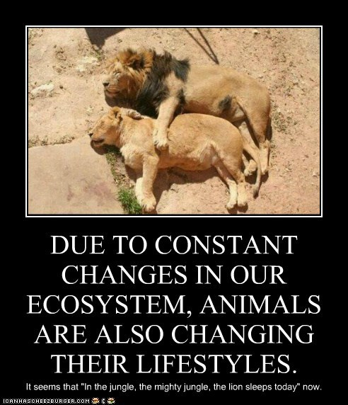 """DUE TO CONSTANT CHANGES IN OUR ECOSYSTEM, ANIMALS ARE ALSO CHANGING THEIR LIFESTYLES. It seems that """"In the jungle, the mighty jungle, the lion sleeps today"""" now."""