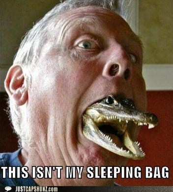 animals,cayman,reptile,sleeping bag,this-isnt-my,this-isnt-my-sleeping-bag,wtf