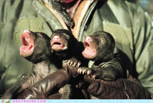 Babies,baby,bear,bears,creepicute,cub,cubs,Hall of Fame,tiny,wrinkly
