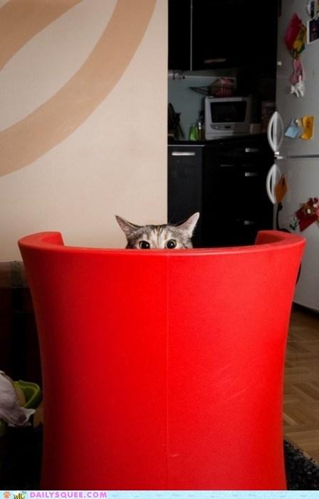 acting like animals cat creepy ominous peeking stalking Staring threat threatening watching - 5445080064