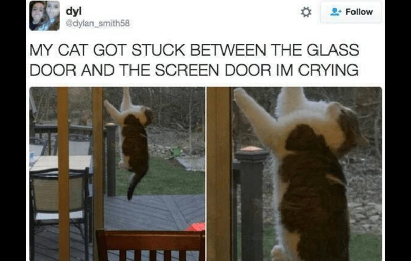 twitter funny memes cute Memes tweets Cats funny cat memes - 5445381