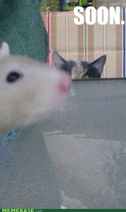 animals best of week cat Impending Doom meow SOON - 5445548032