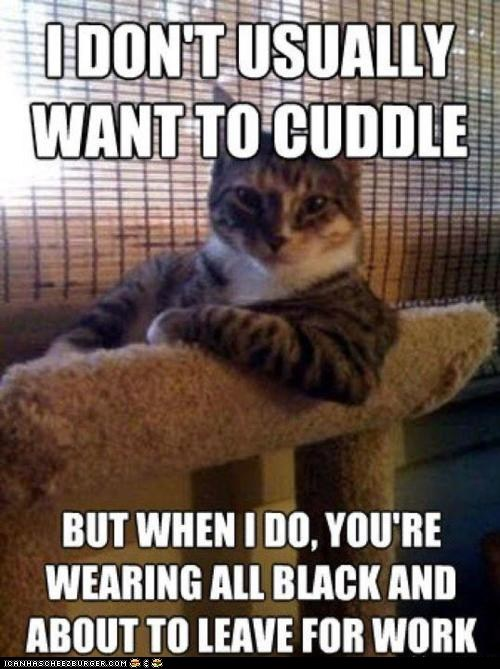 annoying black clothing cuddles cuddling memecats Memes mornings the most interesting man in the world work - 5445765376