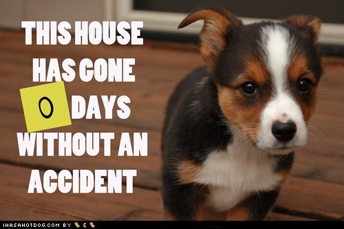 accidents best of the week Hall of Fame i sorry oops pee pee pee puppy sorry whatbreed - 5445769472