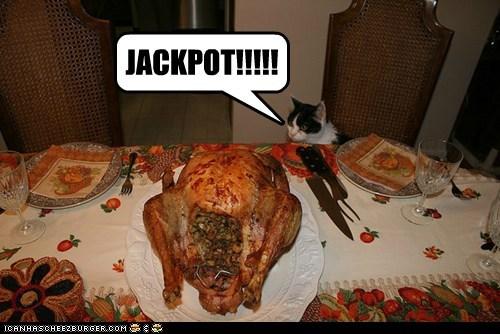 cat food funny I Can Has Cheezburger noms - 5445998848