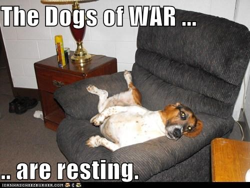 dogs of war,jack russell terrier,laying down,nap time,pooped out,resting,tired