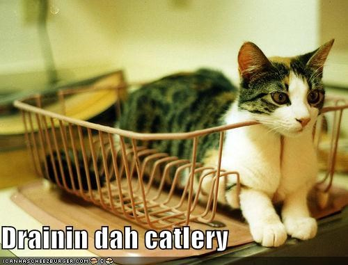 caption,captioned,cat,cutlery,drain,draining,prefix,pun,sitting,strainer