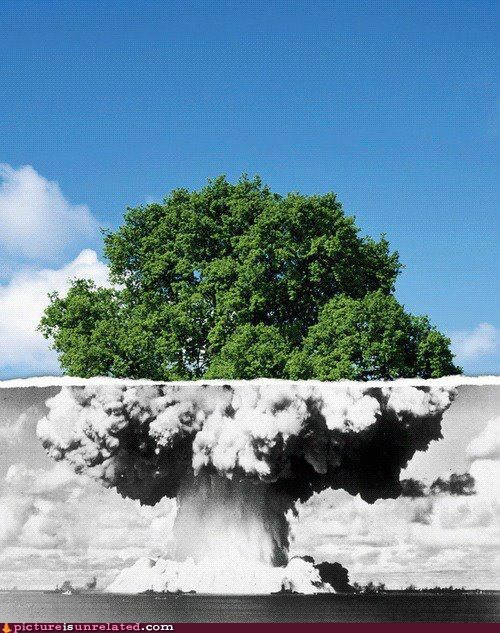 atomic bomb,photography,tree,wtf