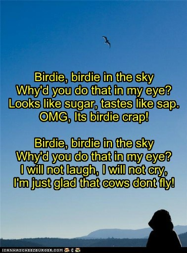 best of week birdie crap poetry weird kid - 5446785024