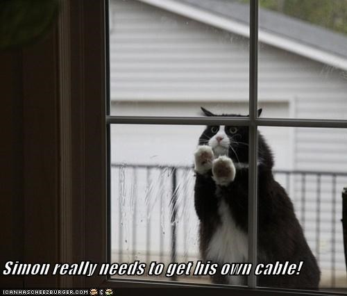 cable caption captioned cat get needs own peeking really stealing window - 5446984192