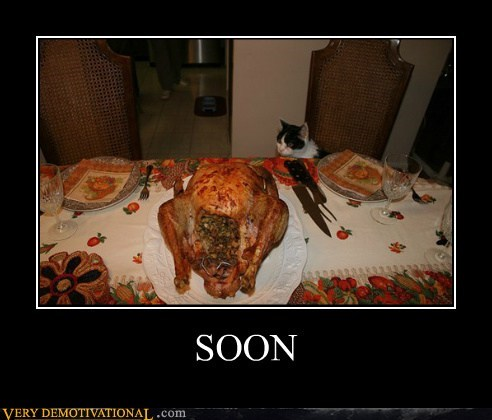 cat hilarious SOON Turkey - 5447001344