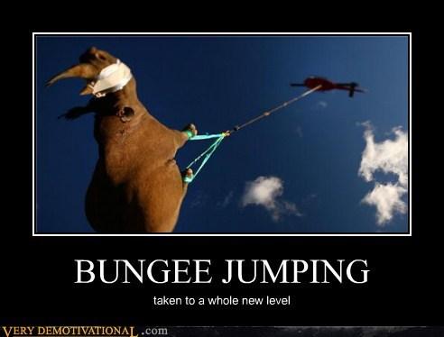 animals bungee jumping hilarious rhino - 5447084544