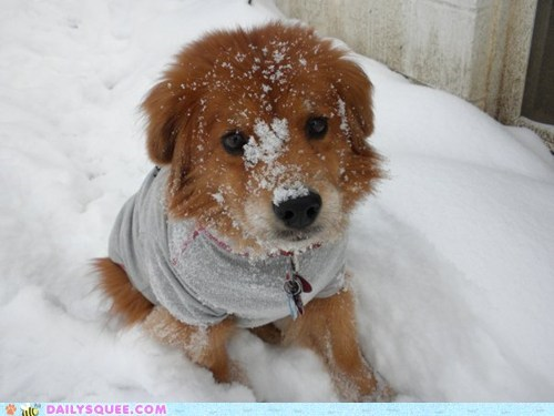 dogs frolicking playful playing r-i-p reader squees snow - 5447787776