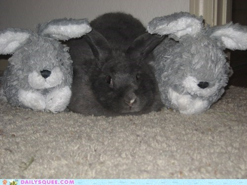 bunny do want friend friends friendship happy bunday rabbit reader squees request stuffed animal treats - 5448163072