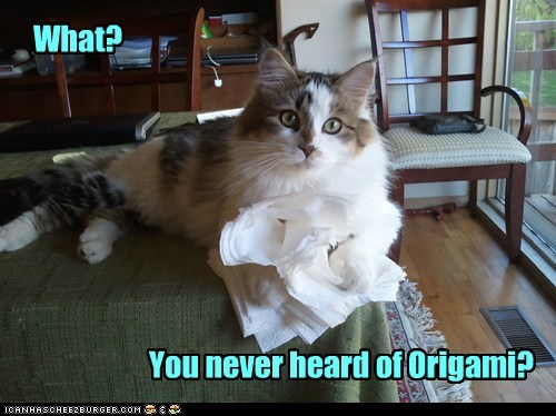 caption captioned cat confused mess nhot origami paper shredding what