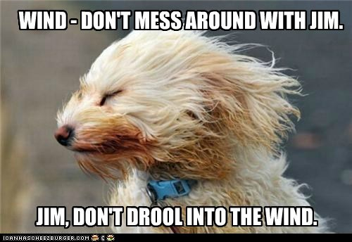WIND - DON'T MESS AROUND WITH JIM. JIM, DON'T DROOL INTO THE WIND.