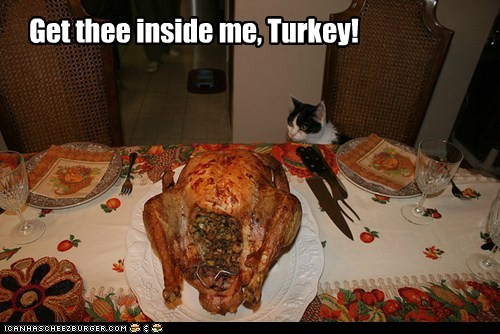caption captioned cat dinner do want get inside me nomming noms thanksgiving thee Turkey waiting