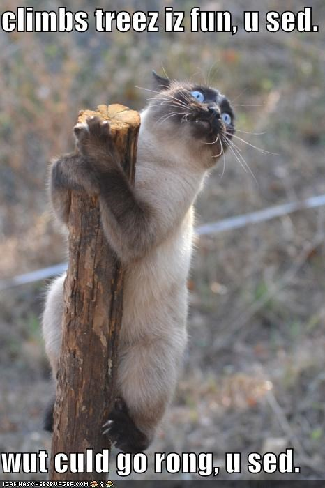 bad bad idea best of the week caption captioned cat climbing climbing a tree Hall of Fame I Can Has Cheezburger scared scaredy cat stuck tree trust - 5448752128