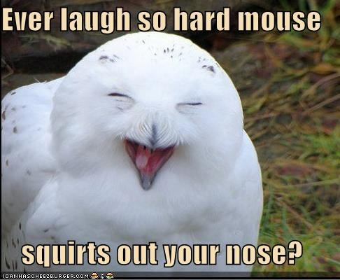 best of the week,caption,captioned,ever,hard,laugh,lolwut,mouse,nose,out,Owl,question,so,squirts