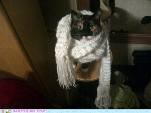 acting like animals,cat,designer,excuse,expensive,explanation,hipster,Knitted,mother,poor,rationale,scarf