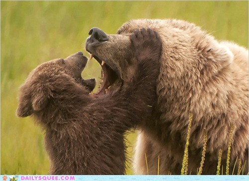 acting like animals,advice,bear,bears,checkup,cub,dental,dentist,examining,flossing,mouth,parent,warning