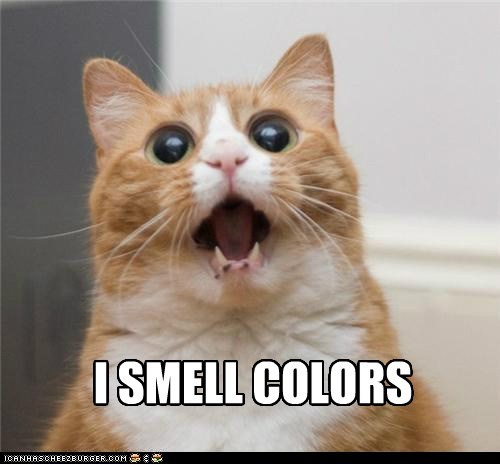 cat colors drugs high I Can Has Cheezburger i smell colors shocked stoned trippin trippin-out whoa man - 5449217280