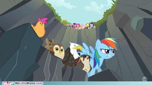 may the best pet win pet race raindow bash Scootaloo season 2 TV - 5449424384