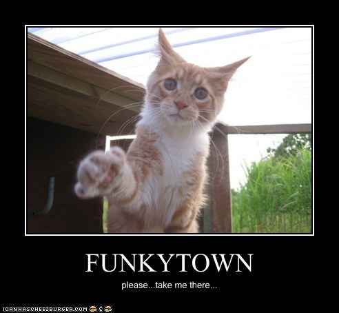 animals cat funkytown I Can Has Cheezburger i want to go with please take me take me with you vacation - 5449578496