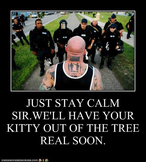 best of the week cat cat stuck in a tree Hall of Fame kitten police riot gear stay calm