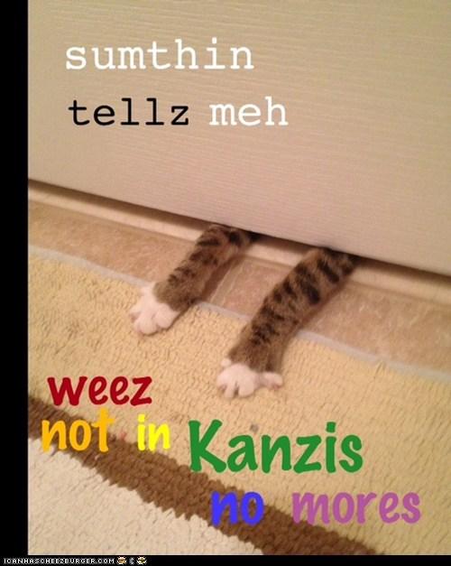 cat I Can Has Cheezburger oops wizard of oz - 5450044928