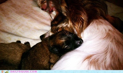 baby contest itty bitty name naming need puppy reader squees runt - 5450166272