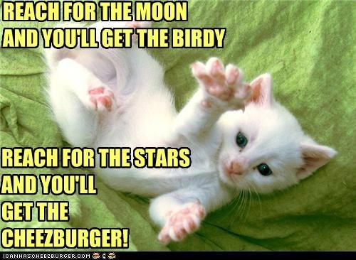 Cheezburger Image 5451305728