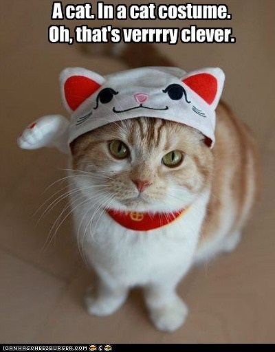 Cheezburger Image 5451621376 & A cat. In a cat costume.Oh thatu0027s verrrry clever. - I Can Has ...