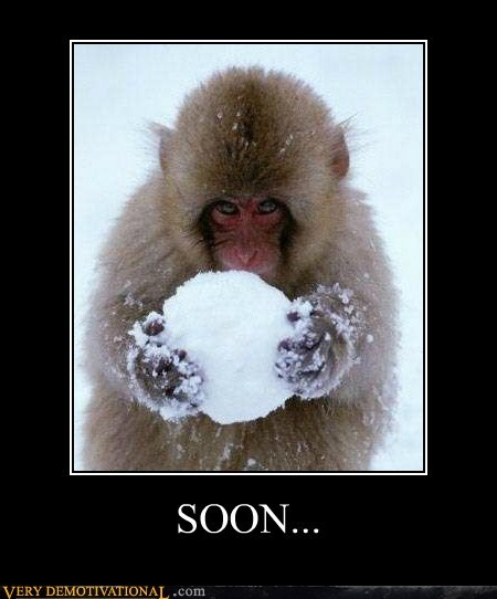hilarious,monkey,snowball,SOON