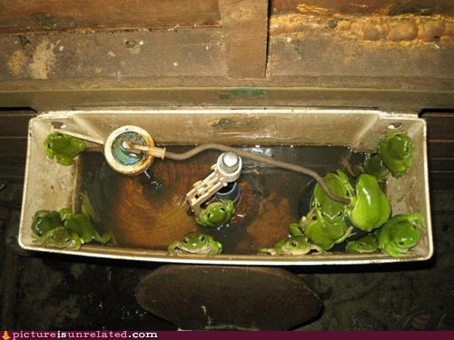 best of week frogs theres-your-problem toilet wtf - 5451684352