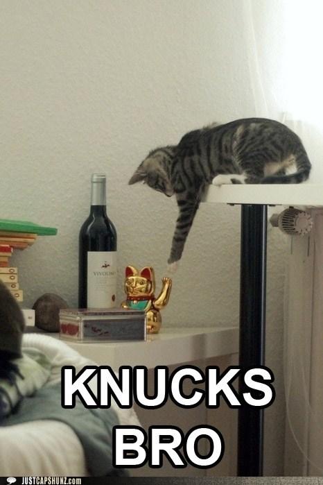 cat funny I Can Has Cheezburger - 5451711744