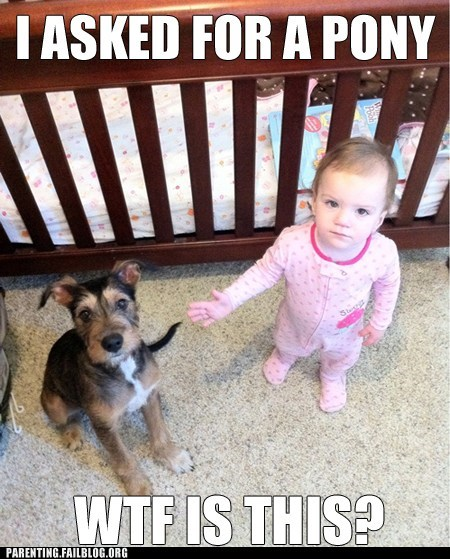 baby,caption,dogs,Parenting Fail,pet,present,toy