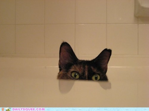 cat do want drink faucet hide n seek peekaboo peeking reader squees tap tortie waiting water - 5452933376