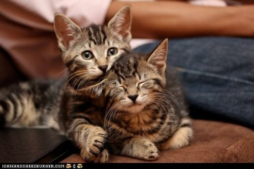 annoying cuddling cyoot kitteh of teh day eyes closed on top snuggling two cats - 5453025536