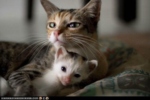 Babies cyoot kitteh of teh day family hugging hugs kitten mama mom newborns - 5453030144