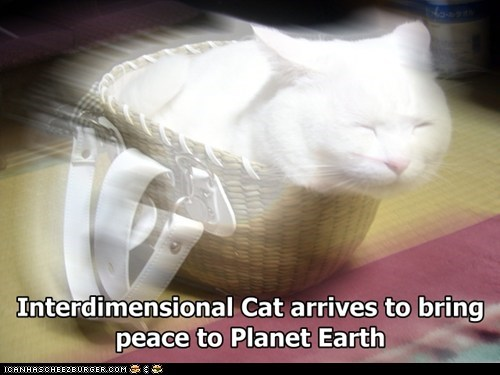 awesome cat cat stevens I Can Has Cheezburger interdimensional cat peace peace train - 5453068032