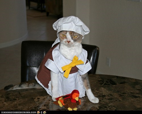 costume cyoot kitteh of teh day dressed up holidays pilgrims thanksgiving Turkey - 5453093376