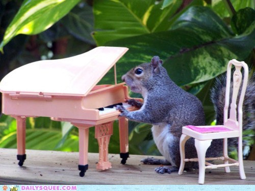 acting like animals annoyed performing piano playing posed posing quote song squirrel upset - 5453234432