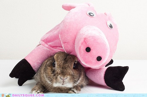 acting like animals,bunny,crushed,do not want,happy bunday,heavy,pig,rabbit,stuck,stuffed animal,under,upset,weight
