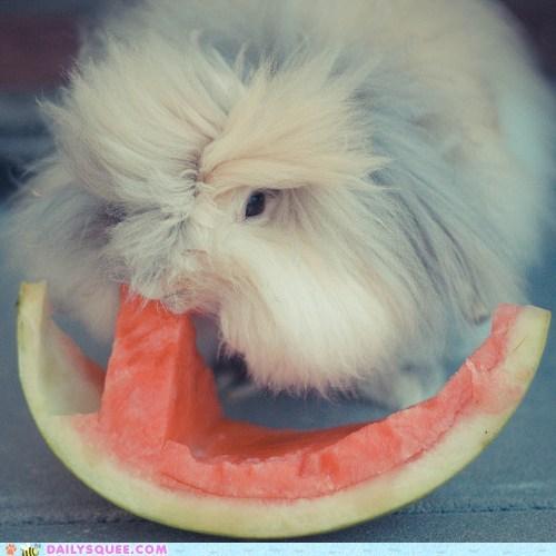 acting like animals attack bunny do want eating happy happy bunday nomming noms omnomnom Pokémon rabbit watermelon - 5453296896