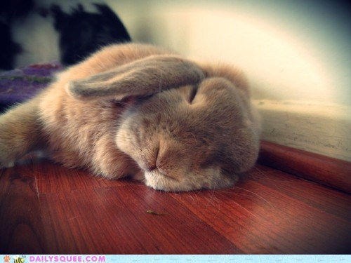 asleep bunny exhausted happy bunday rabbit sleeping tired tiring