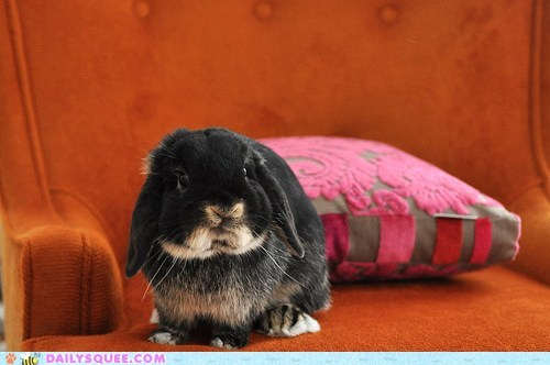 adorable bunny face happy bunday opposite rabbit unbearably squee zomg - 5453550080