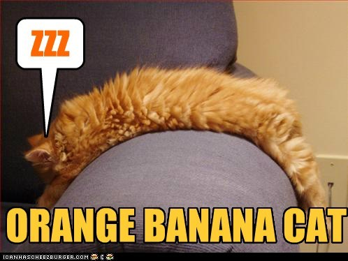 ORANGE BANANA CAT ZZZ