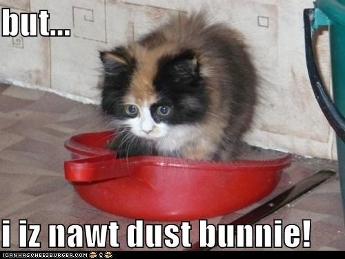 cat clean dust dust bunny lolcat spring cleaning